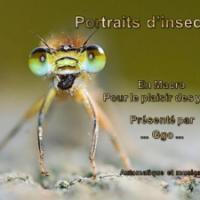 Portrats d'insectes (macro)