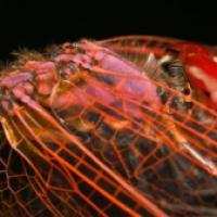 Les Insectes en Macros