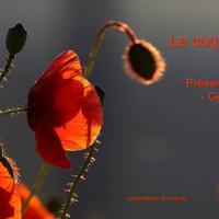 Le Coquelicot - Une ode à la vie, à l'amour
