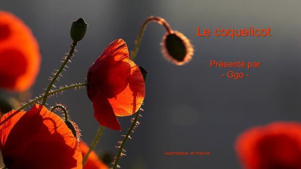 C-127 Le coquelicot - une ode à l'amour - Ggo