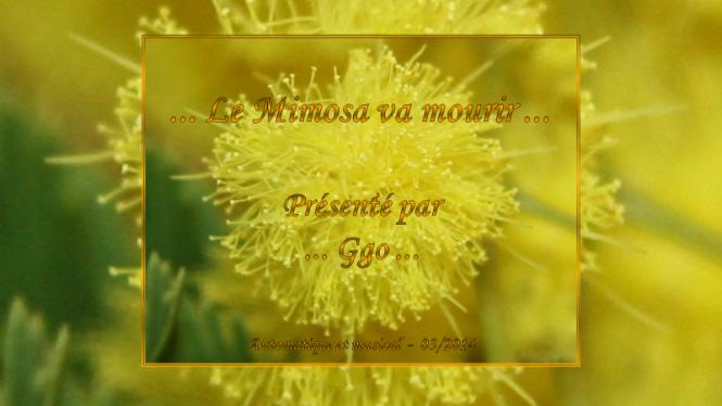 199-2 le mimosa va mourir - Ggo