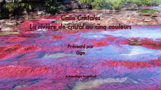 255-5 - Caño Cristales, la rivière de cristal au cinq couleurs