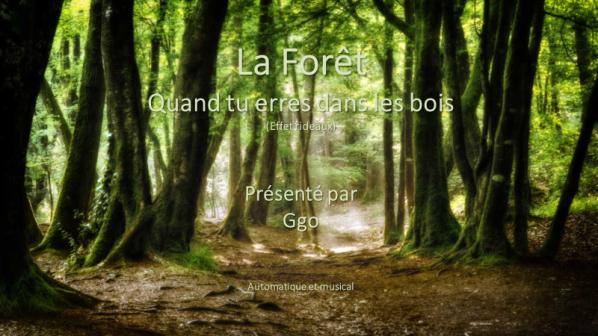 C-113 La Forêt - Quand tu erres dans les bois - Ggo