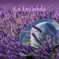 La Lavande (1)